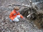 Touching a Tree Root