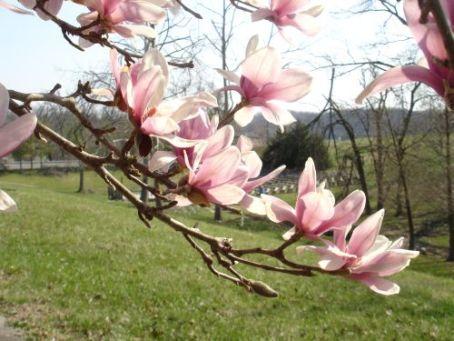 spring-09-purple-park