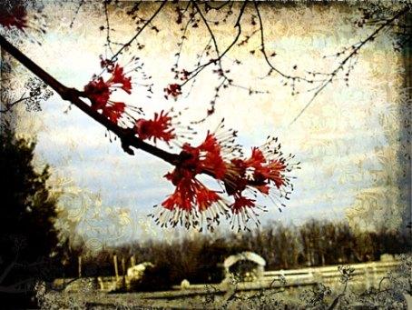 spring-arriving-2