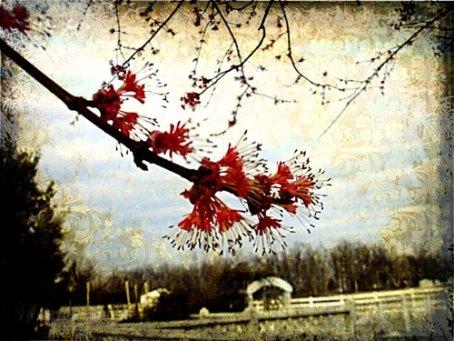 spring-arriving-3