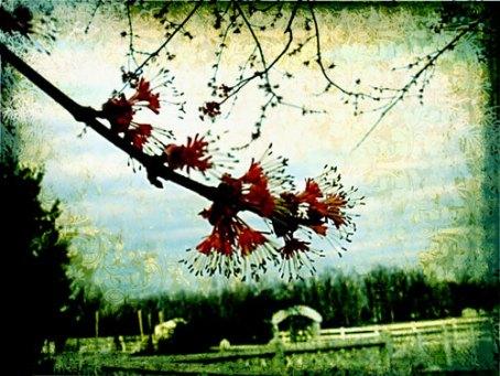 spring-arriving-d