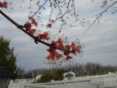 spring-arriving-orig