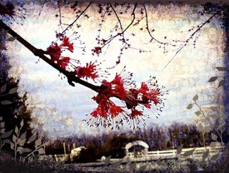 spring-arriving