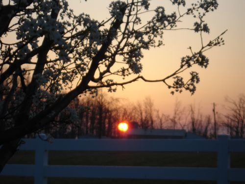 fence, tree, sun rising