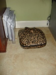 Ah, after shopping, my $.50 foot massage (yes, that's leopard print...will look GREAT under my desk)